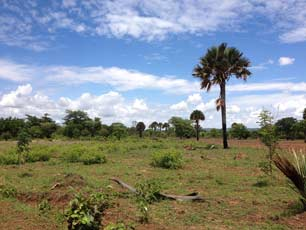Tanzania landscape with palm trees