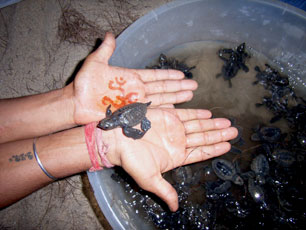India_Goa_Turtle-Hands_web.jpg