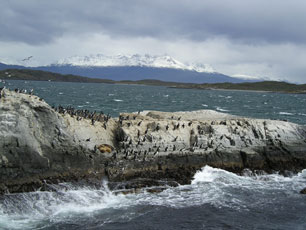 Penguins at Southern tip of South America