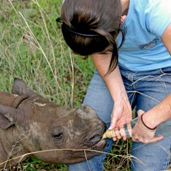 Volunteer working with a baby rhino at a wildlife conservation program in Africa.